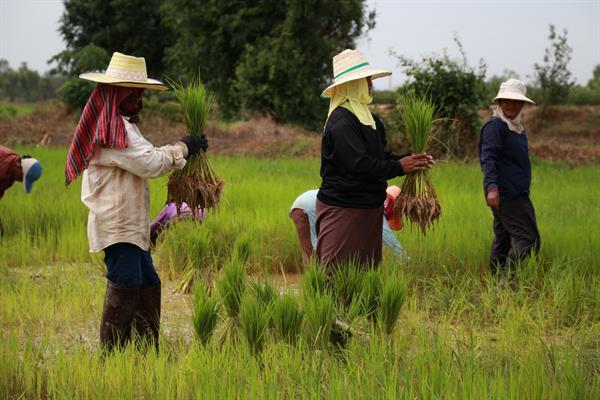 การปรับตัวของเกษตรกร กับวิกฤติภัยแล้งในยุคปัจจุบัน