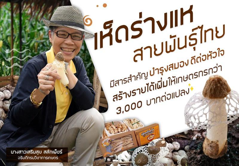 เห็ดร่างแหสายพันธุ์ไทย คุณสมบัติตอบโจทย์คนรักสุขภาพและผู้สูงวัย