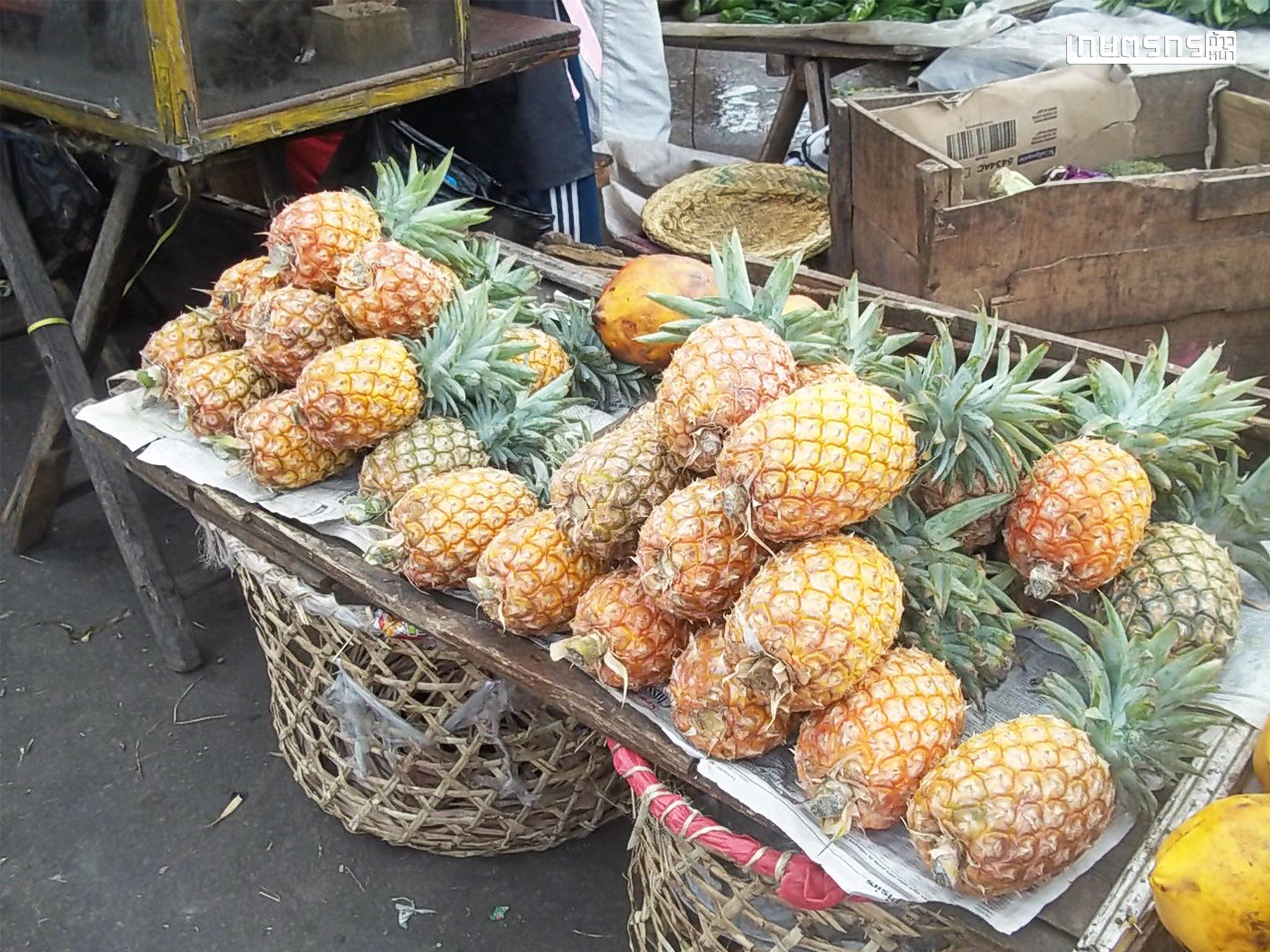 สับปะรด พันธุ์นางแล ปลูกได้ไม่แคร์สภาพดิน