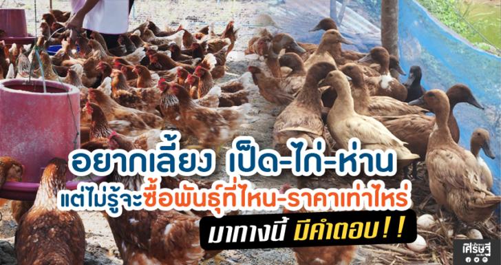 อยากเลี้ยง เป็ด-ไก่-ห่าน แต่ไม่รู้จะซื้อพันธุ์ที่ไหน-ราคาเท่าไร มาทางนี้ มีคำตอบ