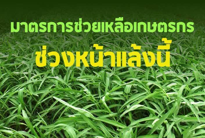 เตรียมมาตรการช่วยเหลือเกษตรกรช่วงหน้าแล้งนี้ สร้างการรับรู้ข้อมูลข่าวสาร ให้คำแนะนำดูแลพืชอย่างถูกวิธี