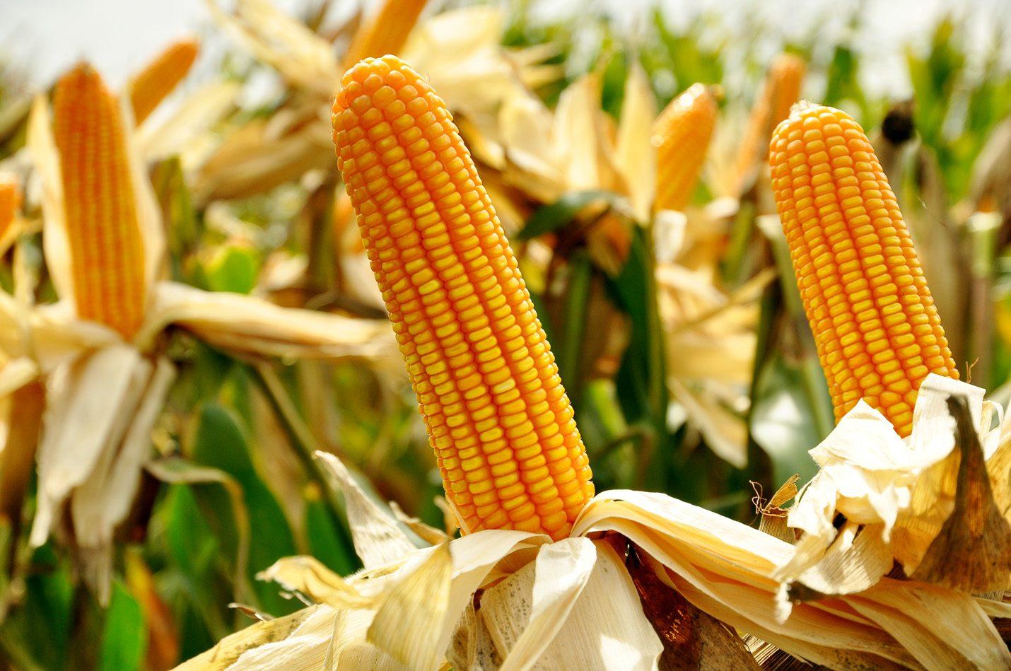 สรุปภาวะสินค้าเกษตรประจำสัปดาห์ วันที่ 10-14 มิถุนายน 2562