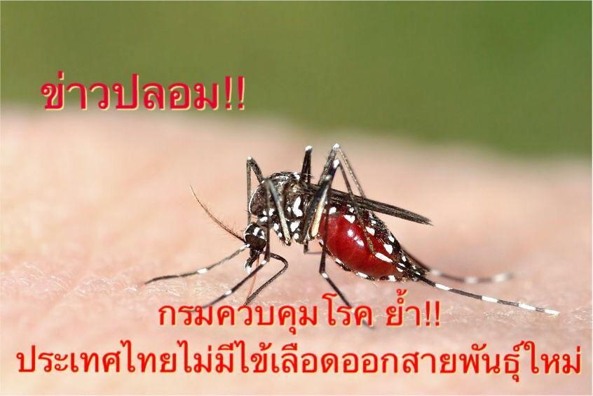 กรมควบคุมโรค ย้ำประเทศไทยไม่มีไข้เลือดออกสายพันธุ์ใหม่ มีเพียง 4 สายพันธุ์เท่านั้