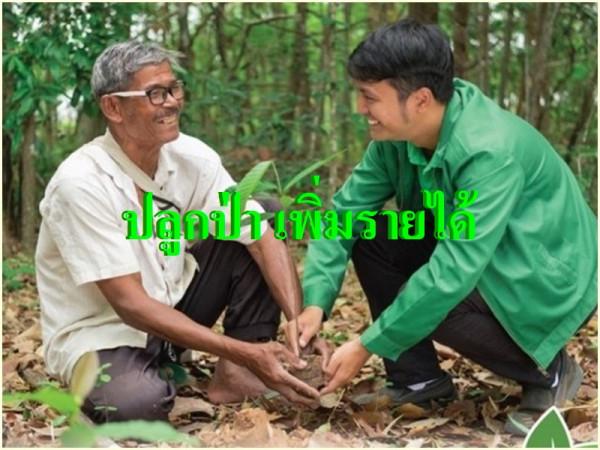 """ธ.ก.ส.หนุนเกษตรกรปลูกป่าสร้างรายได้ เน้น11 จว.เหนือ """"ลดบุกรุกป่า-พืชเชิงเดี่ยว"""""""